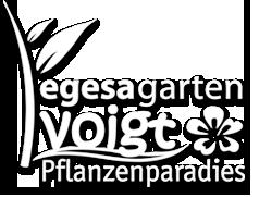 Pflanzenparadies Voigt in Straubenhardt