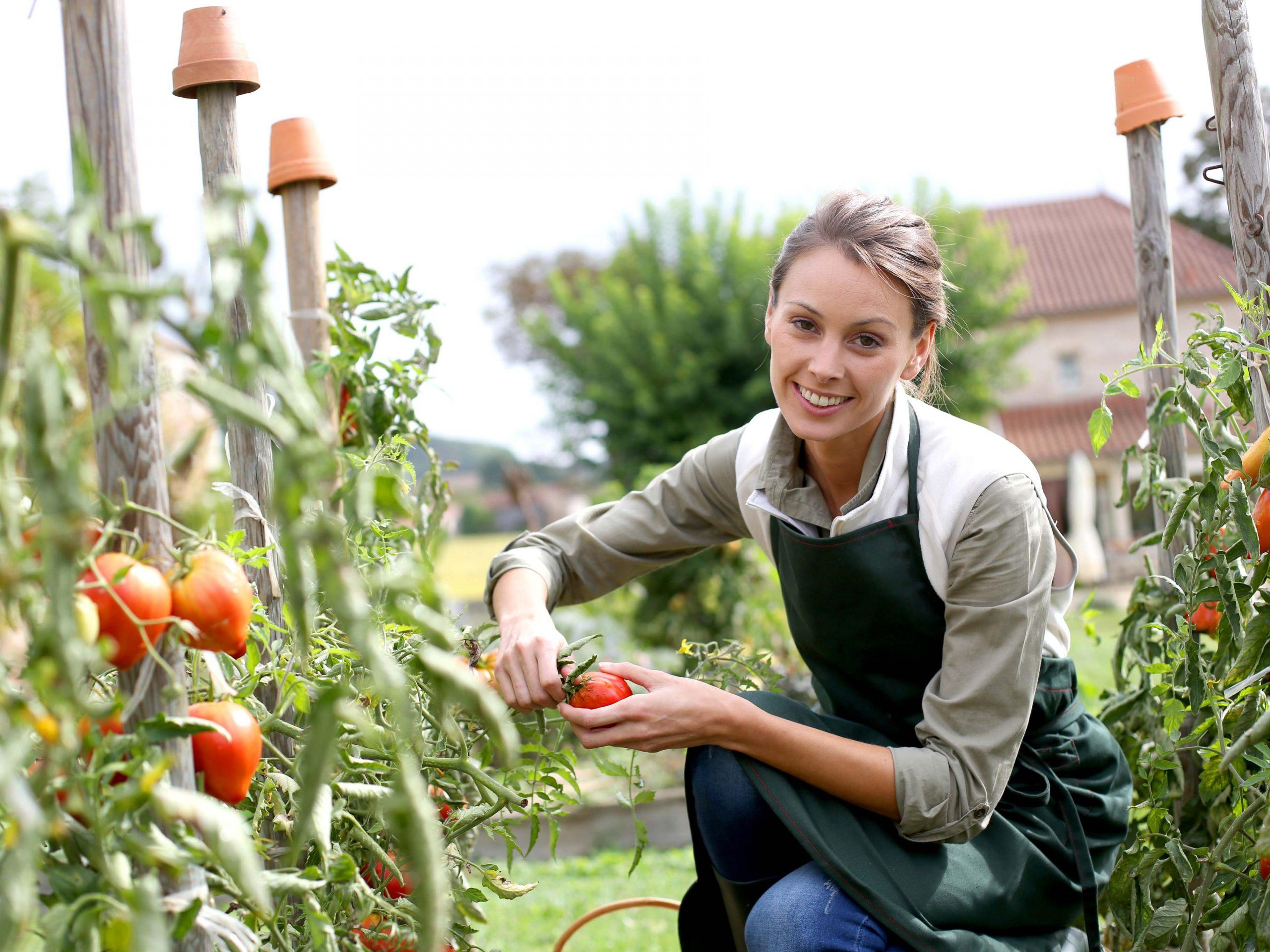 Obst, Gemüse & Kräuter